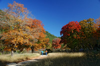 View of color on the Maple Trail.