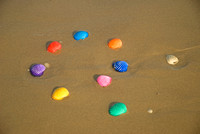 Color sea shells on a wet sandy beach.
