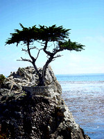The unbelievable survival of the Lone Cypress is shown with this photo.