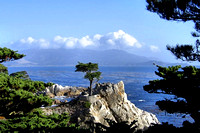 The Lone Cypress Tree is viewed on a bright sunlite day.