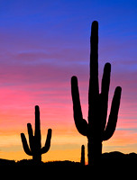 Silhouette of Saguaro Cactus against a colorful sunset.