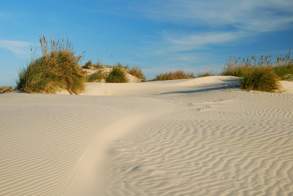 Grass is established and flourishing on top of the dunes